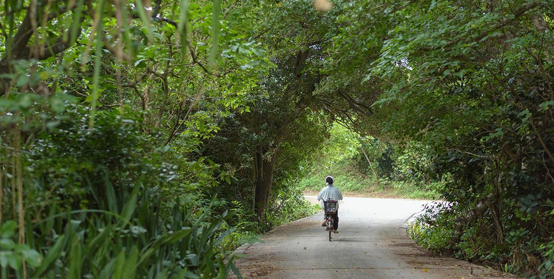 久高島の風景|ガジュマルの森と自転車