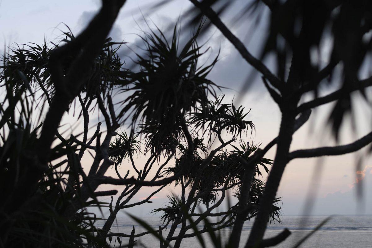 久高島のアダンと海